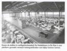 Eindhovens Dagblad 16 juni 2007-p2
