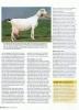 vakblad-geitenhouderij-augustus-2012-p3