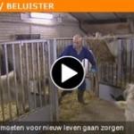 Omroep Brabant - De bokken moeten voor nieuw leven gaan zorgen.